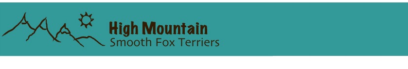 High Mountain Smooth Fox Terriers | Smooth Fox Terriers ...