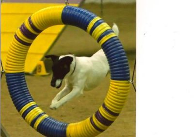 Shawn loves agility!