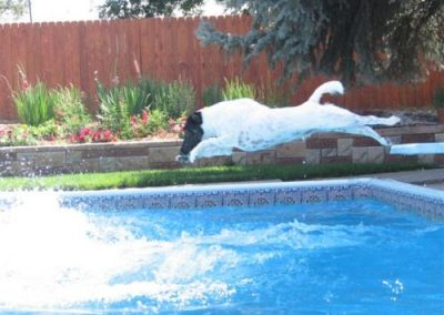 """Rocky"" loves to dive in the pool"