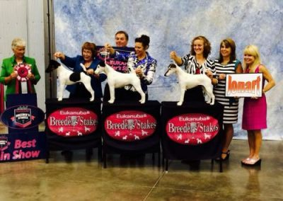 Best in Show at Eukanuba Breeder's Stakes!