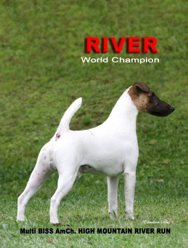 #1 Dog All-Breed in Brazil 2008